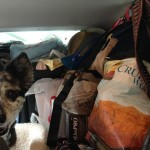 Carload. Photobomb by Roxie!